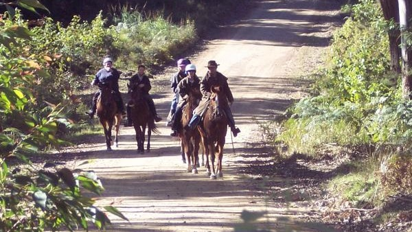 Central Coast Horse Riding